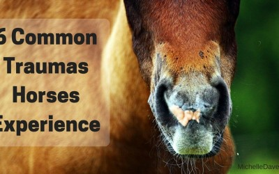 6 Traumas That Could Be Affecting The Current Health Of Your Horse