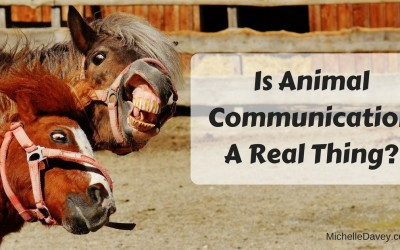 Is Animal Communication A Real Thing?