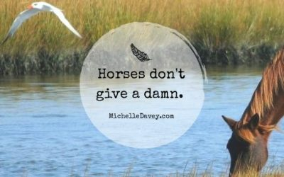 Horses Don't Give A Damn